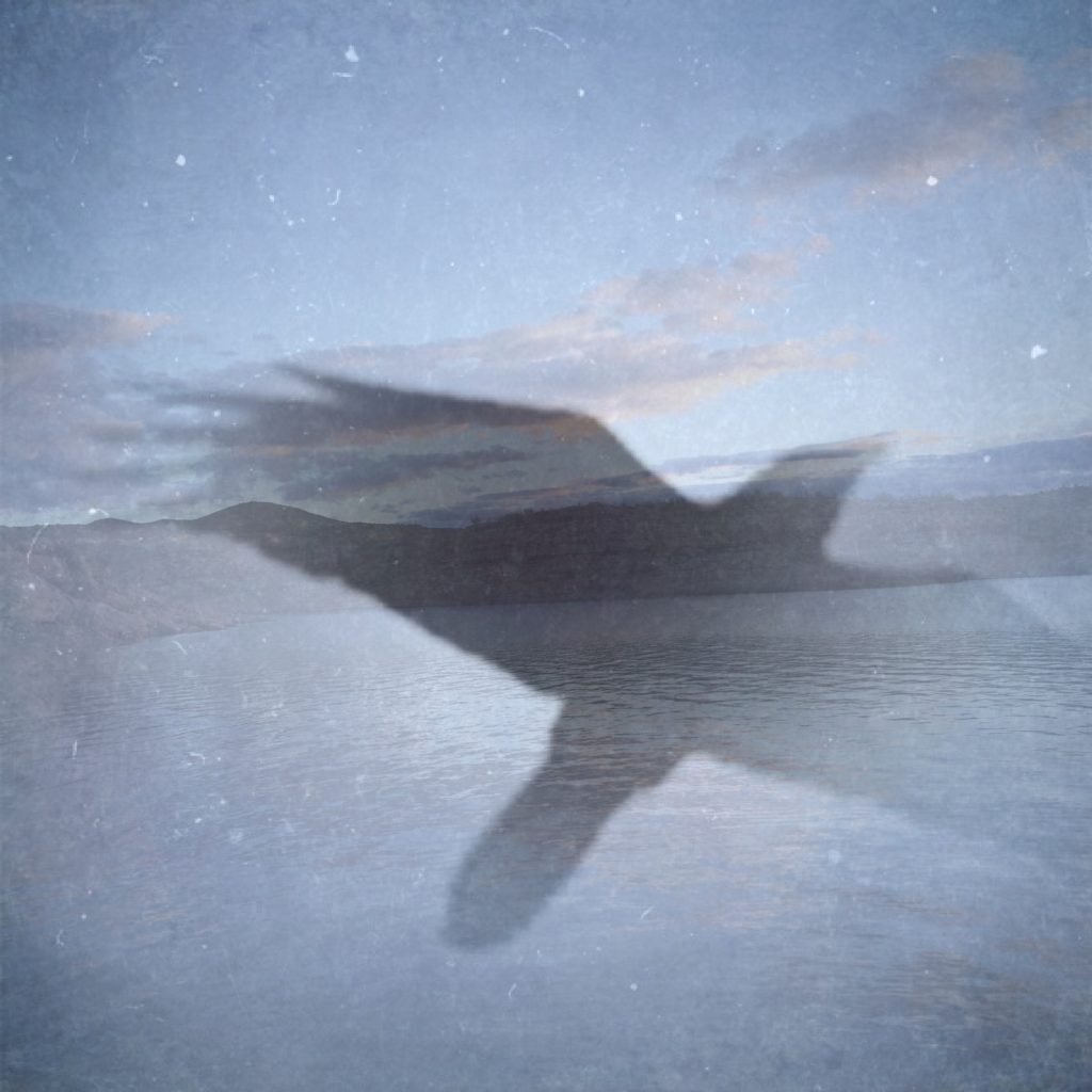 Amanda Judd Creative Flight